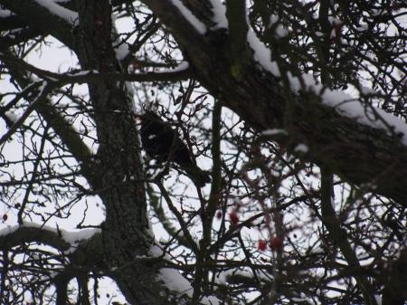 Zimowe Ptakoliczenie 2019