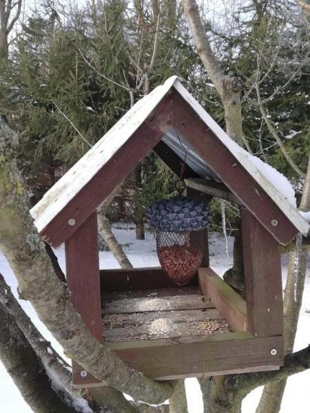 Pomóż ptakom przetrwać zimę
