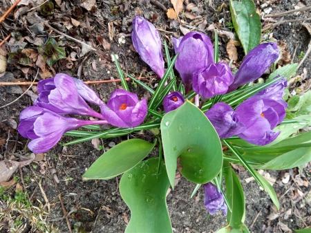 Wiosenne obserwacje przyrodnicze